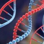 Gene care reglementeaza ritmul circadian legate de probleme de greutate